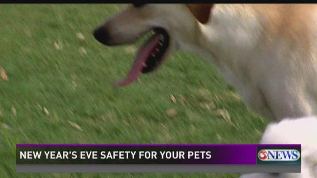 Pet safety during New Year's Eve   KiiiTV.com